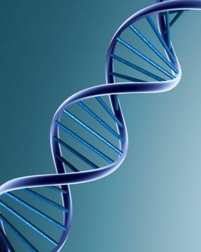 ADN_hélice.jpg