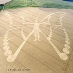 Crop circle du 6 août 2009.JPG