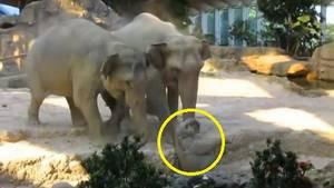 des-visiteurs-ont-filme-une-scene-emouvante-dans-un-parc-animalier-en-suisse_67425_w300.jpg